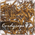 wholesale cordyceps sinensis usa, australia, uk